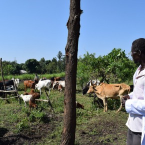Kick starting the dairy industry for farmers in western Kenya