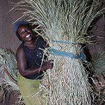Village-based dairy advisor Priscilla Ouma launches a 'restore milkcampaign'