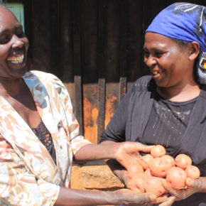 Creating access rekindles dreams of a brighter future:  Clean seed potato improves productivity