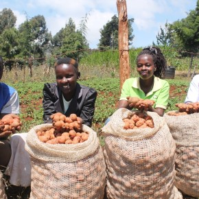 Tenfold potato harvest for youth in Meru, Kenya