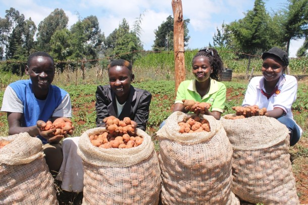 FIPS youthful farmers (from left of photo Stanley, Lucy, Evelyn and Faith) showing part of harvest from seed potato tubers they purchased from Hub Seed Multiplier James Ngugi.