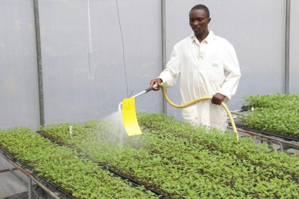 cuttings- watering